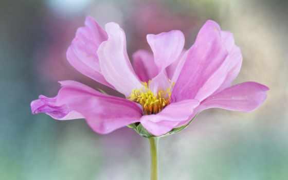 Цветы 103135