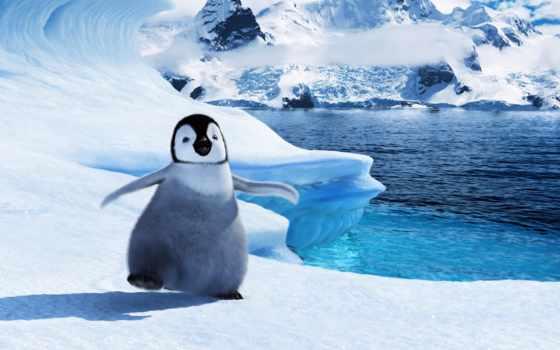 делай, ноги, пингвин