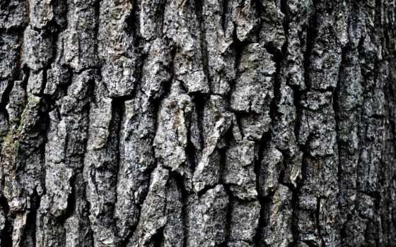 кора, дерево, high