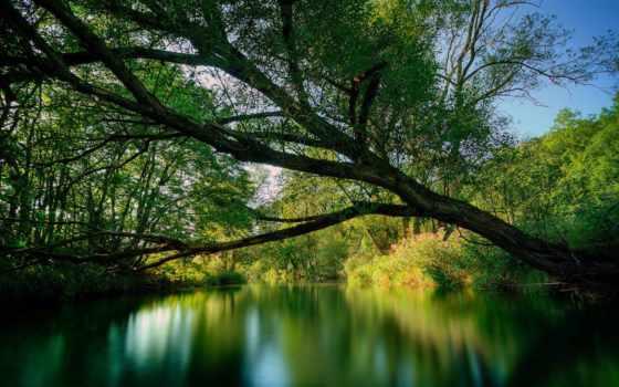 природы, природа, красавица