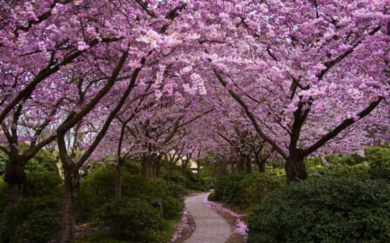 garden, cherry, цветение, Сакура, цветущая, природа, вышивки, весна, схема,