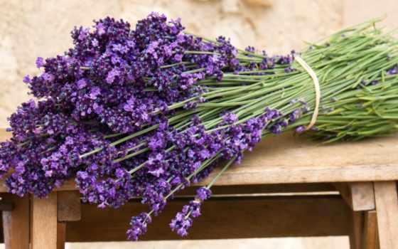 lavender, букет, цветы, скамейка, tape, поле,
