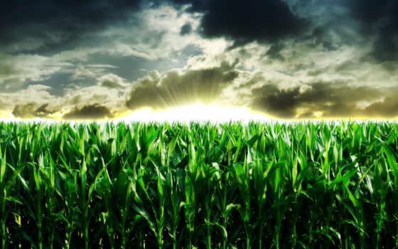 природа, поле, пейзажи -, кукурузы, smashing, красивые, журнала, странно, маки, удивительно,