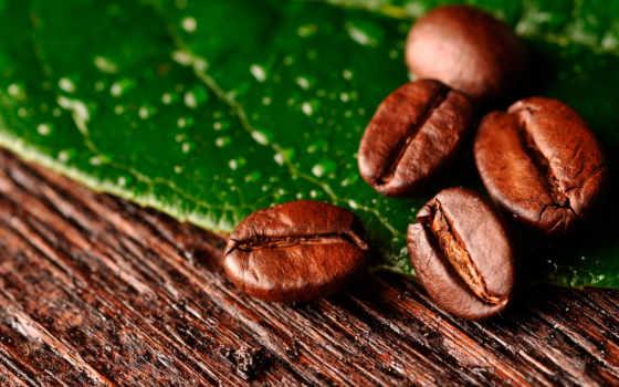 coffee, зерна, макро, лист, крупные, яркие,