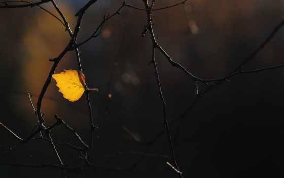 лист, осень,
