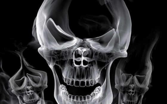 череп, черепа