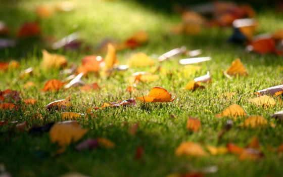 осенью, osen, уход, газоном, листья,