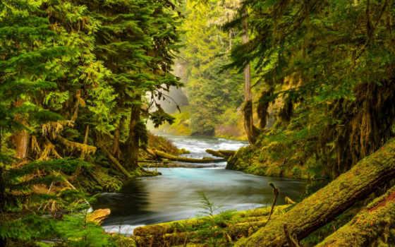 лес, деревья, река