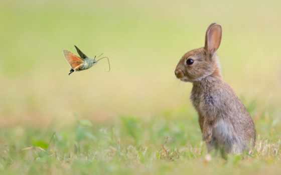 кролик, small, животные