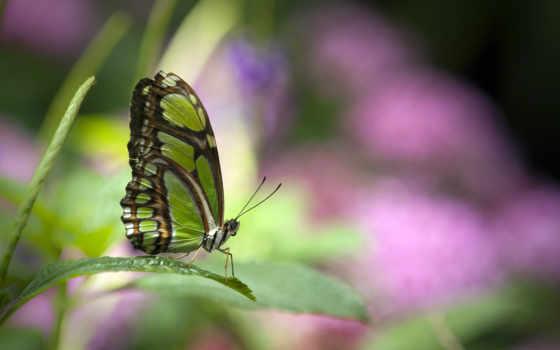 butterflies, con, hành