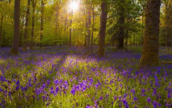 поляна, цветочная, лесу Фон № 135462 разрешение 1920x1200