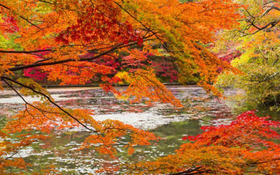 природа, ветки, осень, река, туман, картинка, trees, лес, тегом,