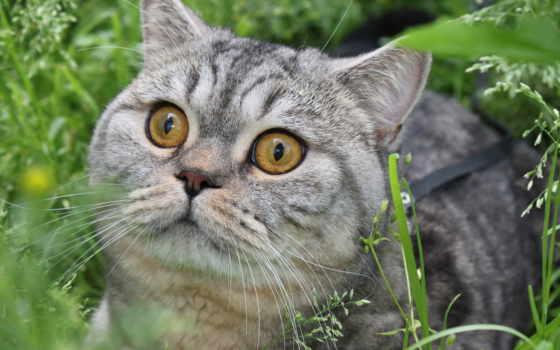 кошки, страница, пушистые, zhivotnye, коты, красивые, заставки, фотографий, мониторов,