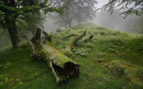 лес, log, лесу, pinterest, туман, беларуси, поросшее,