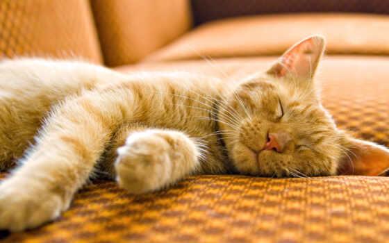кошки, за, кот, коты, яndex, funny, company, подборка, животными, while,