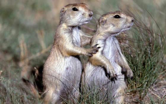 animals, prairie