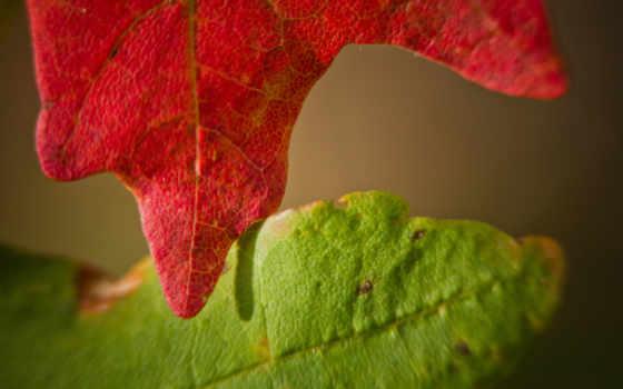 осень, الگو