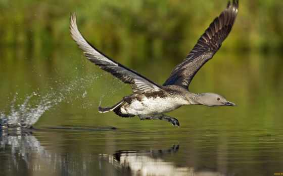 birds, flying, птицы