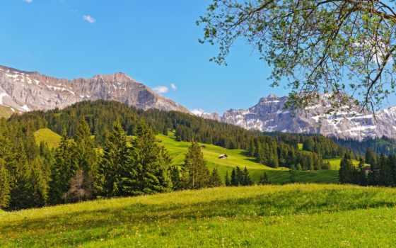 горы, swiss, швейцария, природа, лес, швейцарии, луг,