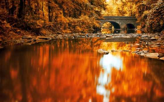 осень, осенние, река, лес, пейзажи -, природа, landscape, листва,