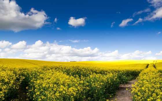 поле, дорога, рапс, небо, русское, oblaka,