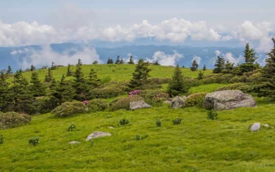 trail, roan, appalachian, камни, highlands, холмы, trees, луга, гора, поле,