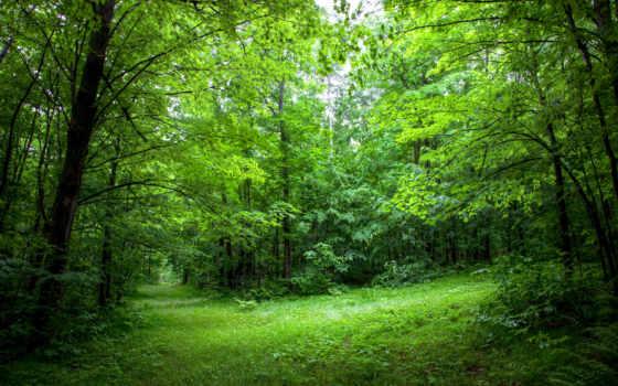 natural, растительность, wisconsin, лес, are,
