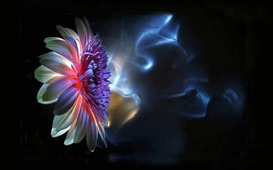 cvety, фантастические, pinterest, képek, virágok, neon, красивых,