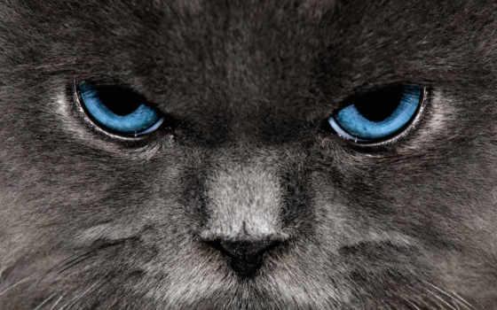 кот, нашем, мяу, этого, вредно, заходер,