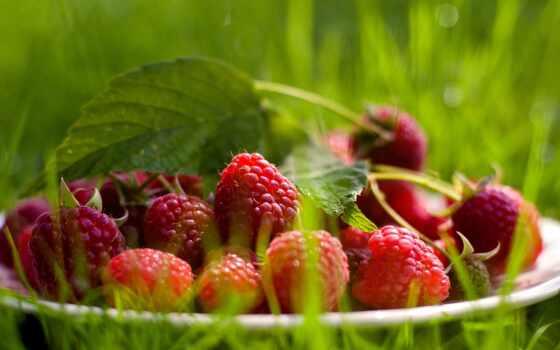 малина, ягода, summer, нефть, природа, коллекция, website
