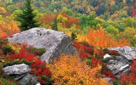 осень, лист, природа, водопад, vodyt, carolina, одесса