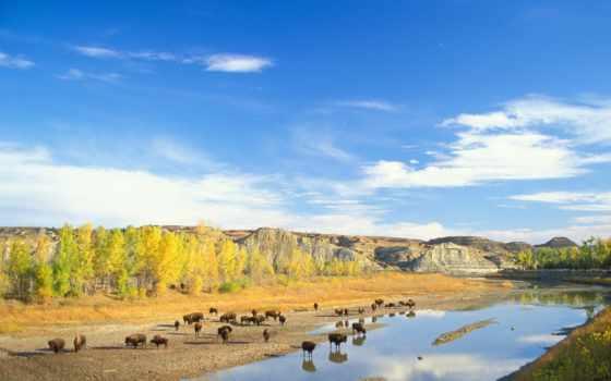 zhivotnye, животных, река