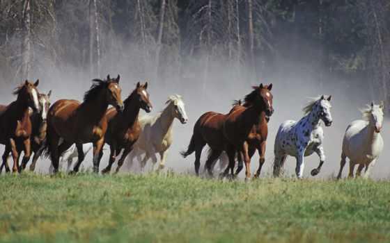 zhivotnye, лошади, анимации