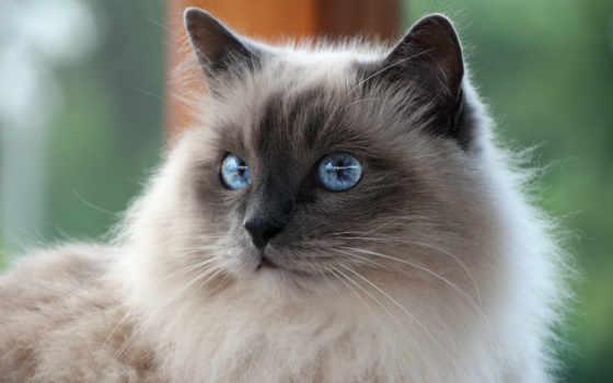 кот, коллекция, усы