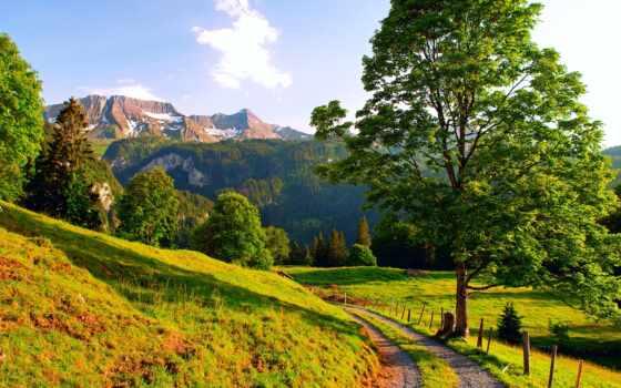 тропинка, earth, лес