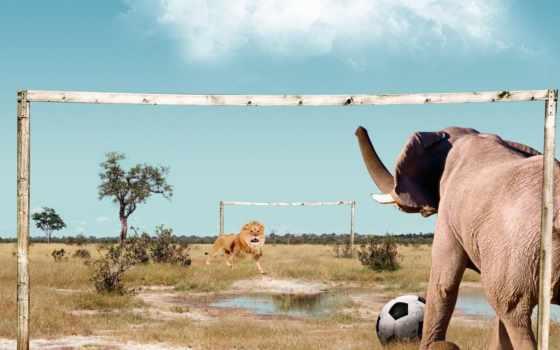 lion, слон, футбол, играют, слоны, решая, among, саванны, них,