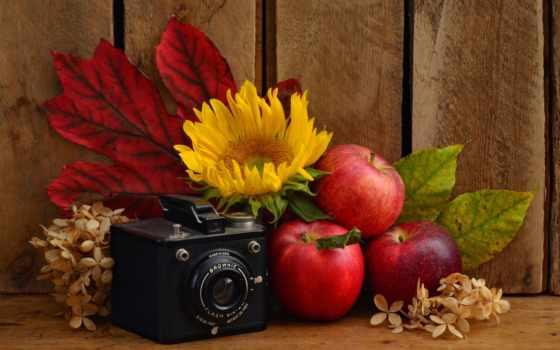 натюрморт, осень, техника, натюрморты, фотокамерой, красными, подсолнухом, яблоками, cvety,