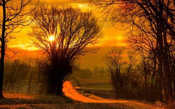 лес, природа, восход