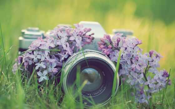 siren, cvety, фотокамера