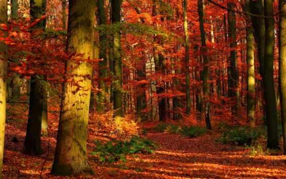 осень, лес, деревя