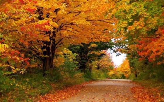 осень, времена, года, природа, парки, деревя, листья, леса,