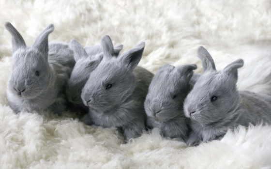 кролики, грызуны,
