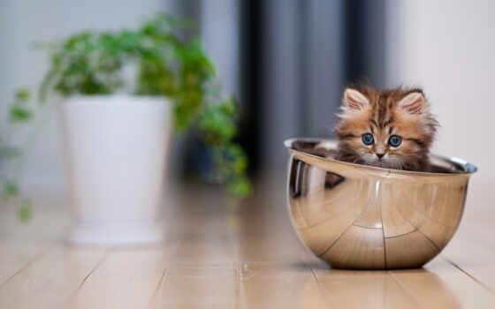 котенок, дэйзи, самый