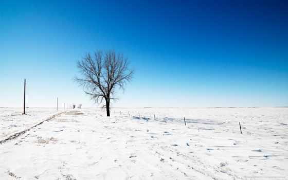 дорога, снег, дерево