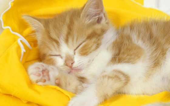 котятами, милыми, прочитать, милые, целикомв, свой, котята, community, цитатник, спит,