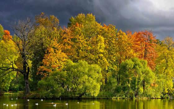 природа, trees, широкоформатные