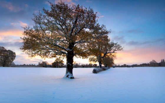 зимней, природы, фона, поры, collector, природа, дек, зимних, красавица, пейзажей, пейзажи -,