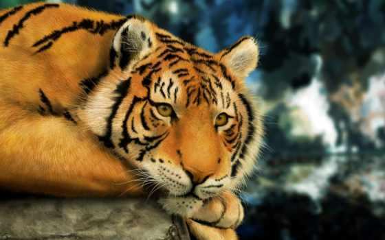 tapety, zwierzęta, pulpit, tapeta, najlepsze, darmowe, tygrysy, nr,