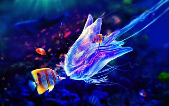 jellyfish, ultra,