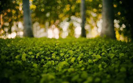 природа, фон, изображение, растение, png, пушистик,
